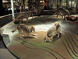 Image of an exhibit